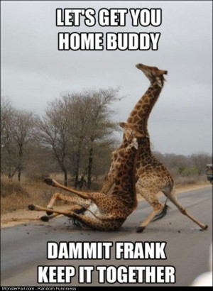 Funny Pics Damnit Frank