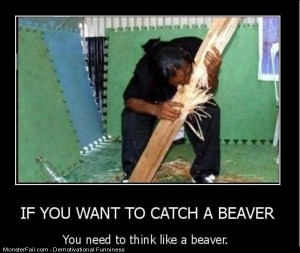 How To Catch A Beaver