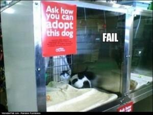 Adopt A Dog FAIL