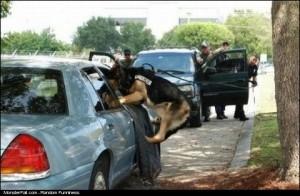 Police Dog WIN