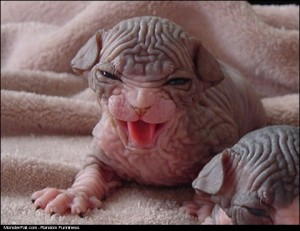 Monster Newborn Alien Dog WIN What Are You Looking At