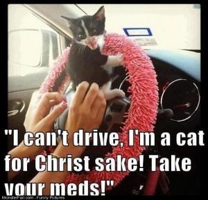 Funny Pics I Cant Drive