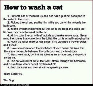 Funny Pics How To Wash A Cat