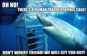 Funny Pics Helpful Shark