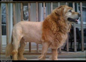 Cool lion dog