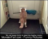 Kitty Fail Meme