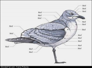 Pics Bird Anatomy
