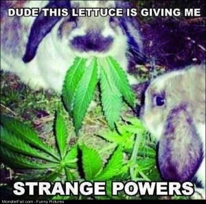 Pics This Lettuce