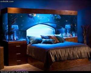 Pics Aquarium Bed