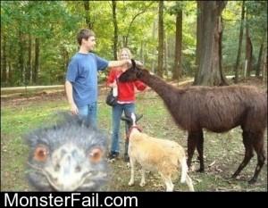 Ostrich Photobomb