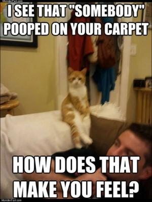 Therapist cat
