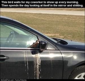 Pics This Bird