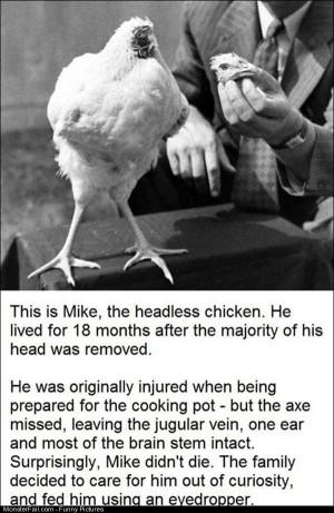Pics Headless Chicken