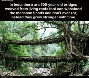 500 year old bridges
