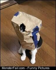 Cats Hide and Seek Fail