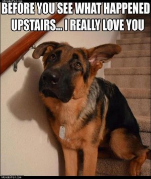 Before you go upstairs