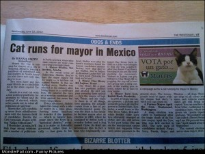 Pics Cat Runs For Mayor