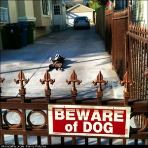 Pics Beware Of Dog
