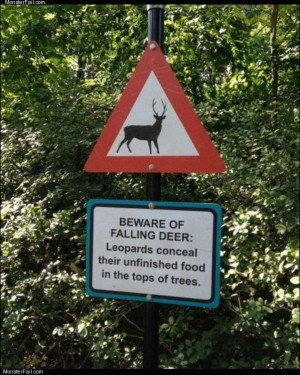 Beware of falling deer