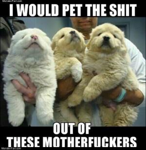 Pet them