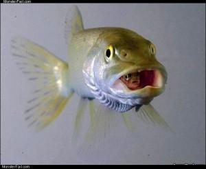 A fish inside a fish