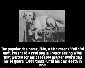 The story of Fido faithfull