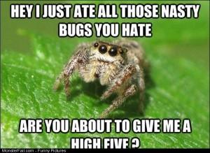 Pics Spiders