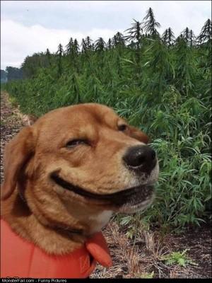 Pics This Dog
