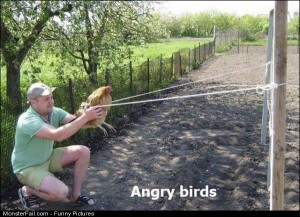 Pics Angry Birds