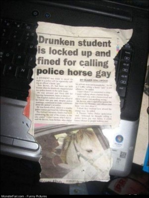 Pics Gay Horse