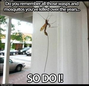 Satan wasp