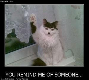 Pics This Cat