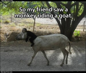 Monkey riding a goat