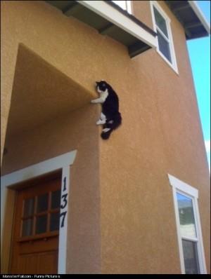 Ninja Cat WIN