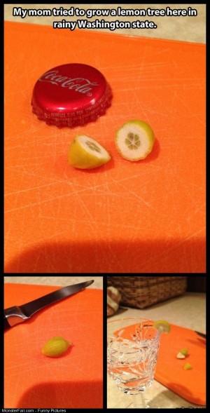 Pics Lemons In