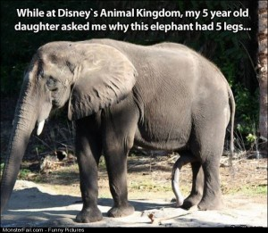 Pics This Elephant