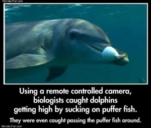 Dolphins are awesome