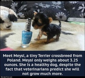 Tiny little dog