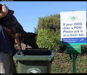 Your dog does a poo