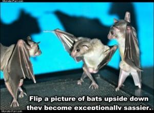 Upside down bats