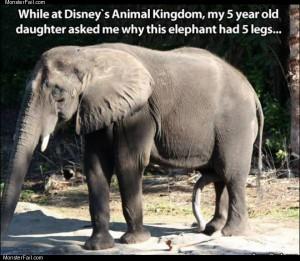 This elephant