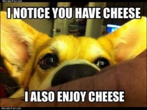Noticed you have cheese