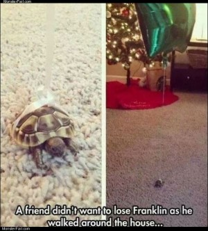 Dont lose franklin