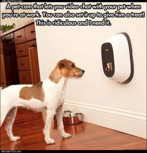 The pet cam