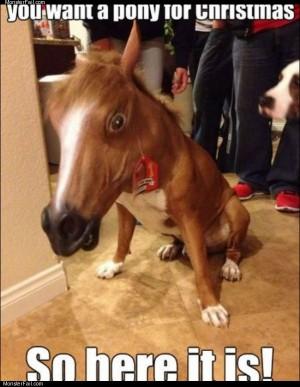 Your pony