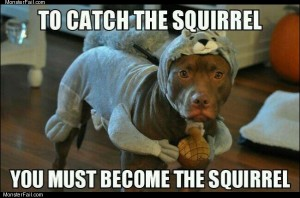 Catching a squirrel