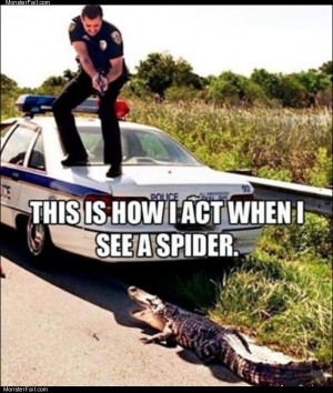 See a spider