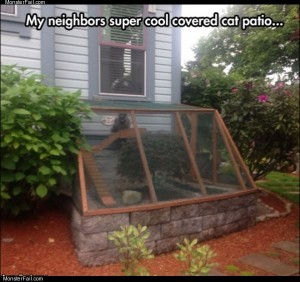 Cat patio