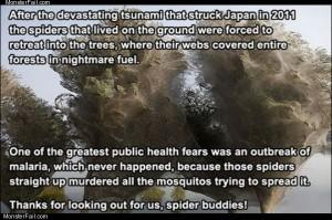 Spider buddies
