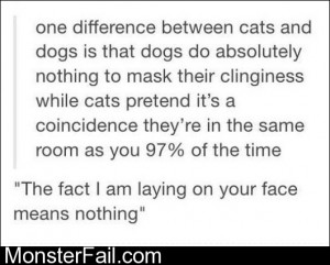 Between Cats And Dogs